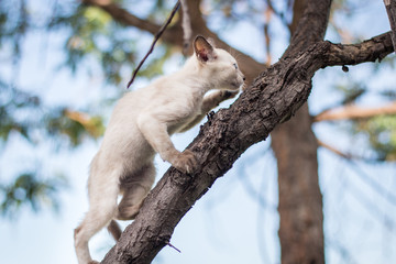 Kittens playing in a tree.