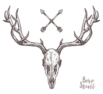 Sketch Of Hipster Deer Skull With Tribal Arrows. Boho Hand Drawn Illustration. Anatimical Drawing Of Skull With Horns
