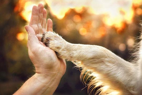 Hund legt Pfote in Hand von Mensch