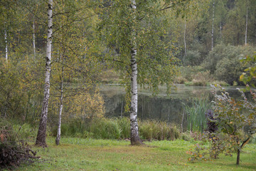 fall - birches at water