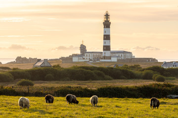 Sheeps and lighthouse in Brittany Wall mural