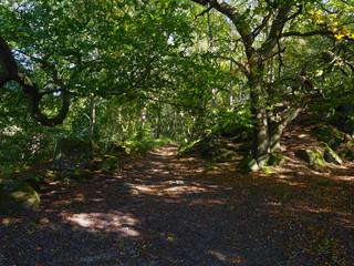 Walk the woodland path