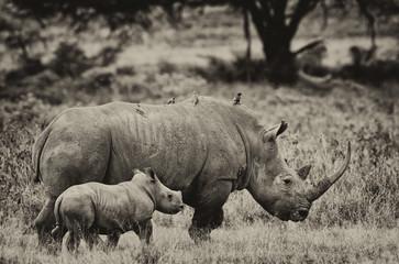 Foto op Aluminium Neushoorn Rhinoceros in the Lake Nakuru National Park, Kenya