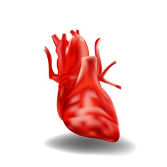 Realistic 3D heart, on white background. Vector illustration
