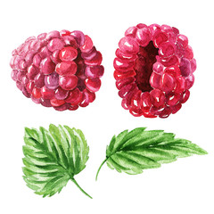 Hand drawn watercolor raspberry set  with green leaves, delicious food art isolated on white background.