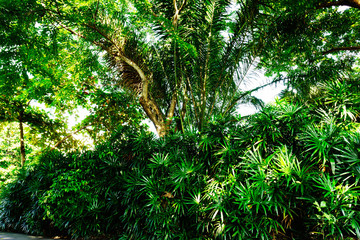 Grand branches of trees on sunny day in tropical of Bangkok, Thailand. Photography an old bigger tree in worm view. It best for landscape, nature, photography and travel.
