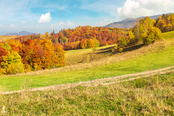 lovely autumn scenery of Carpathian mountains. forest in fall colors behind the grassy meadow. mighty ridge in the distance under the gorgeous sky