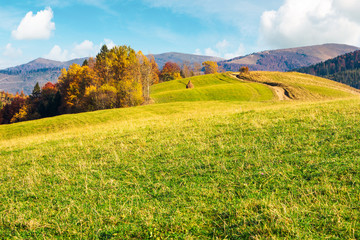 Photo sur Aluminium Colline wonderful mountain landscape in fall season. forest with colorful foliage on the grassy hill. alpine ridge in the far distance. warm weather on a sunny day