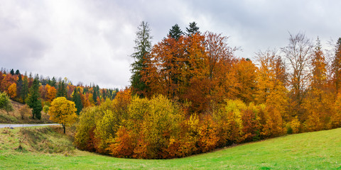panorama of autumn countryside on a rainy day with overcast sky. beautiful colorful scenery