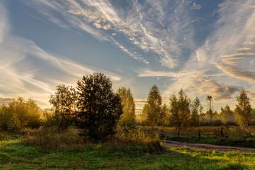 morning rural landscape
