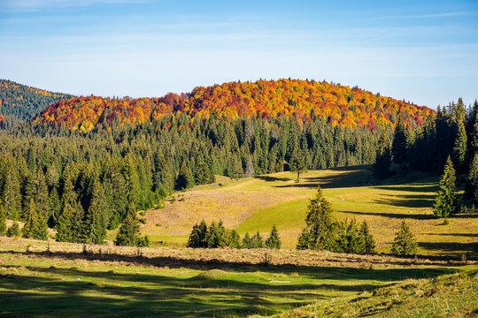 beautiful autumn landscape. distant mountain in fall colors. beautiful sunny weather