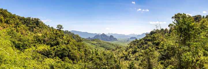 Tropical rainforest in Thailand