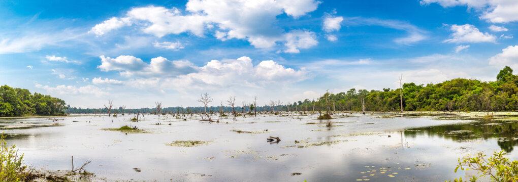 Swamp in Angkor Wat