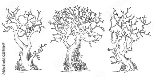 Scary Trees With Twisted Leaves Ivy Outlined For Coloring Page