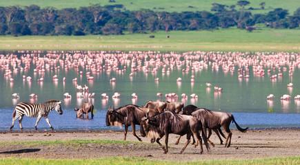 Wildebeests in the Ngorongoro Crater, Tanzania Wall mural