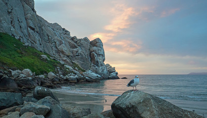 Seagull perched on rock at Sunset at Morro Rock on the central coast of California at Morro Bay California United States