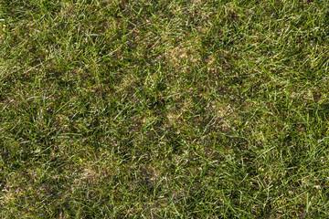 Rasentextur in natürlicher Optik