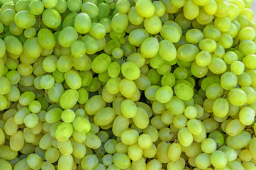The harvest of farm grapes is in the window of the market . Background. Close up