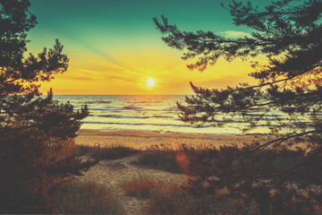 Beautiful sunset over the sea. Pine trees on the seashore