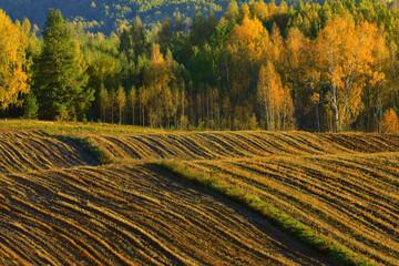 Obraz suwalski park krajobrazowy - fototapety do salonu
