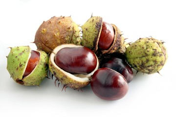 brown chestnuts as chestnut tree seeds