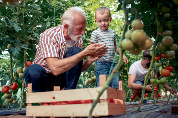Grandpa and grandson working in greenhouse