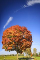 Stieleiche Samen Im Herbst Quercus Robur Buy This Stock Photo And