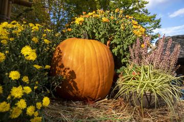 autumn pumpkin with flowers