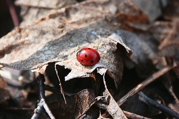 Ladybug in the forest
