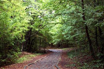 Ein naturhafter  Weg