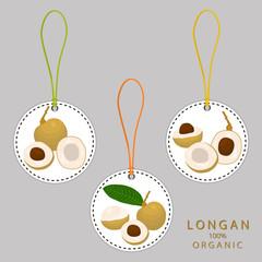Vector illustration for fruit yellow longan