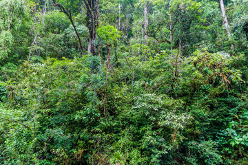 Thick jungle in Panama