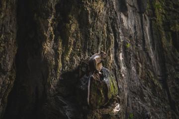 Affe auf Felsen, Höhle