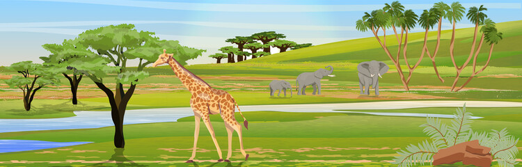 Giraffes eat the foliage of acacia trees. Family of African elephants at the watering hole. African savannah. Realistic vector landscape. The nature of Africa. Reserves and national parks.