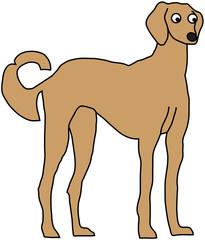 saluki dog cartoon