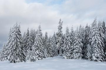Winter wonderland forest