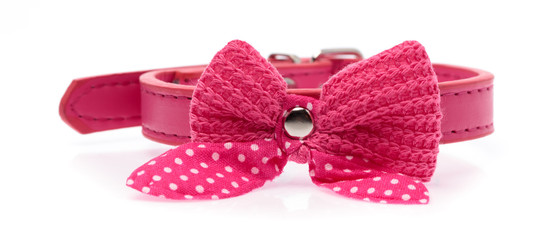Pink pet collar with polka dots and bow tie isolated over white background Fotobehang