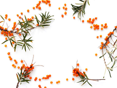 Frame of sea-buckthorn  isolated on white background, flat lay, top view.