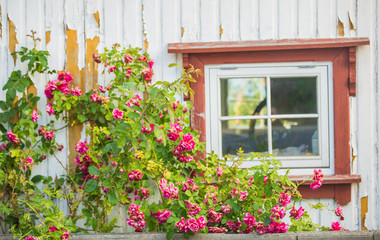 Garden decoration with flowers