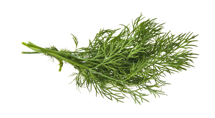 green dill isolated on white background