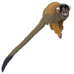 Monkey in vector