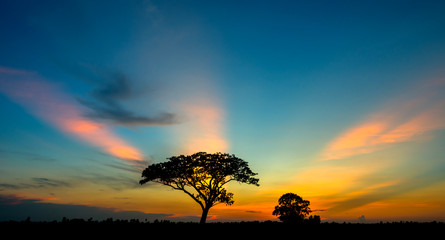 Silhouette tree in Asia with sunrise.Tree silhouetted against a setting sun.Vivid colorful orange sunlight sky.