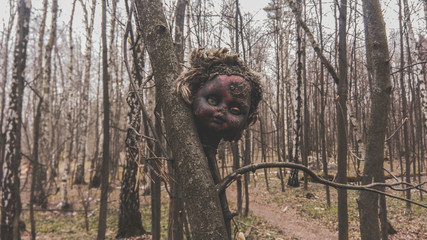 Old damaged burnt head from a baby doll on a tree