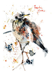 design, illustration, watercolor, background, white, bird, isolated, nature, animal, art, beautiful, drawing, colorful, red, color, paint, blue, cute, wild, vintage, wildlife, hand, element, feather,