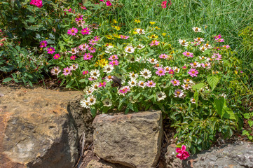 Beautiful flowers, a butterfly and boulders makes a pretty springtime scene