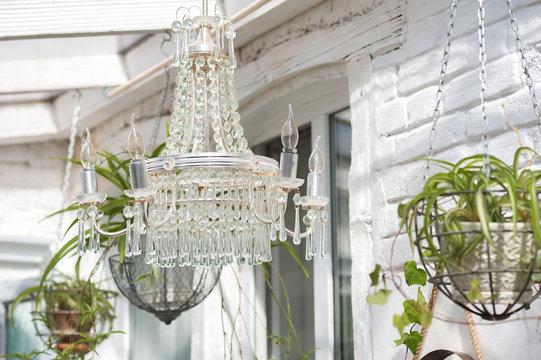 Beautiful crystal chandelier in the winter garden. Plant chlorophytum