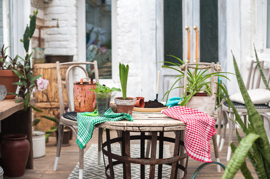 Beautiful winter garden with many flowers in pots. Table for transplanting plants in the middle of the garden. Space for privacy and sports, self-development