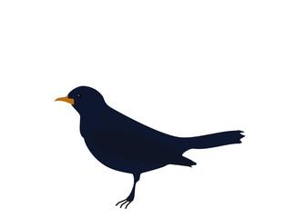 Dark blue bird Songbird on white background, flat design