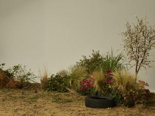 Garden on set