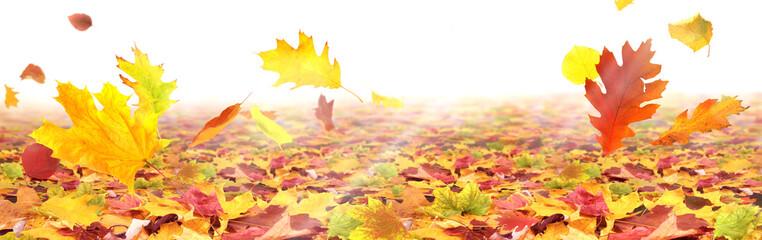 Herbst 186